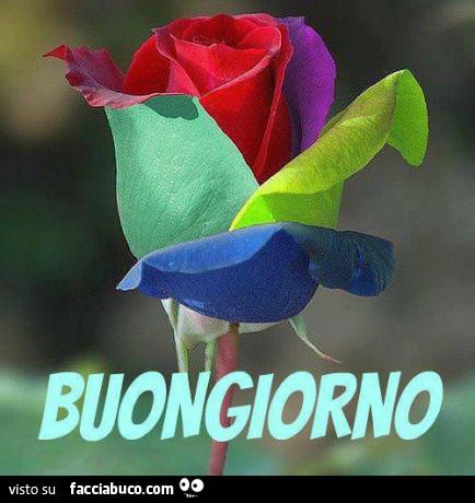 I saluti di marzo - Pagina 3 Eoz6xbiwzk-fiore-con-petali-colorati-buongiorno-buona-domenica-a