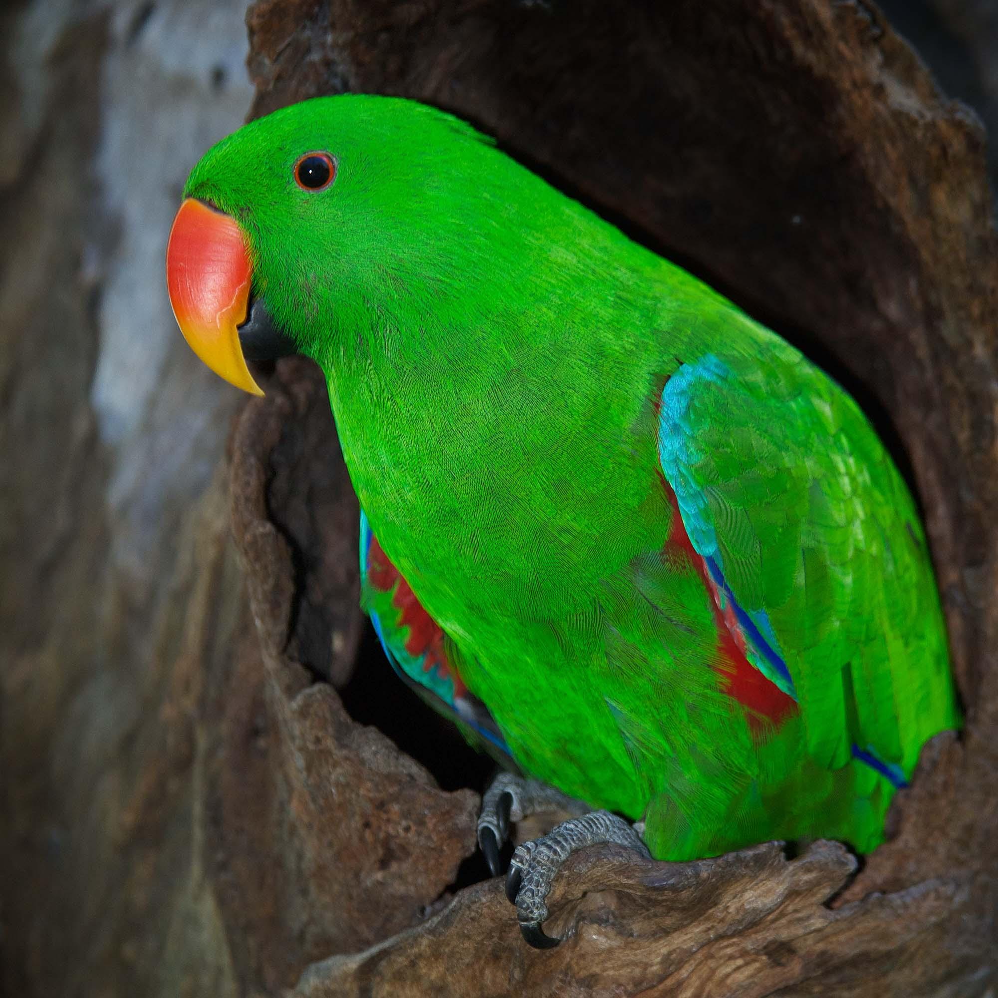 300 australische Papageiennamen