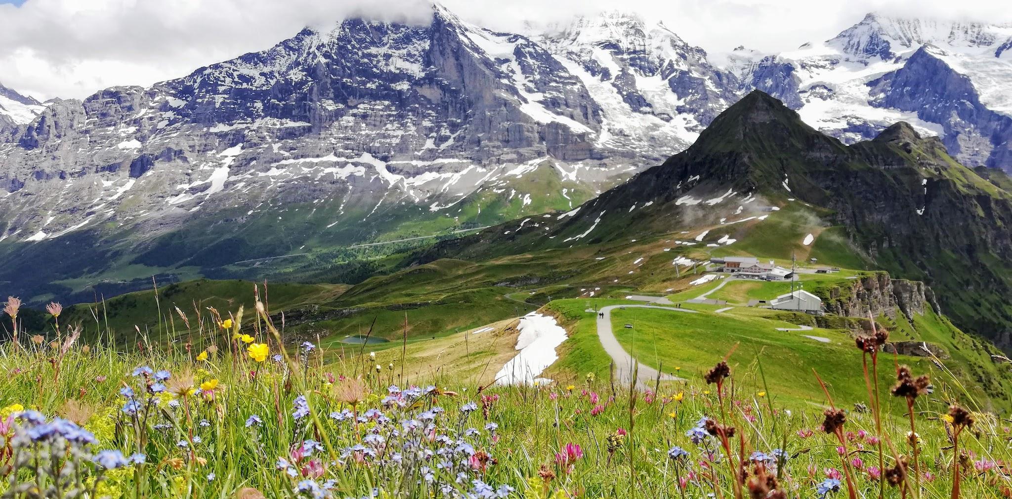Fleurs des Alpes on Royal Walk in Männlichen