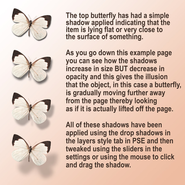 Butterfly-Shadows