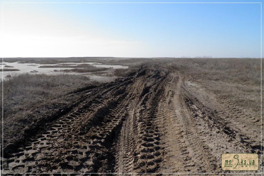 Сліди важкої вантажівки Державної прикордонної служби України на заповідній ділянці