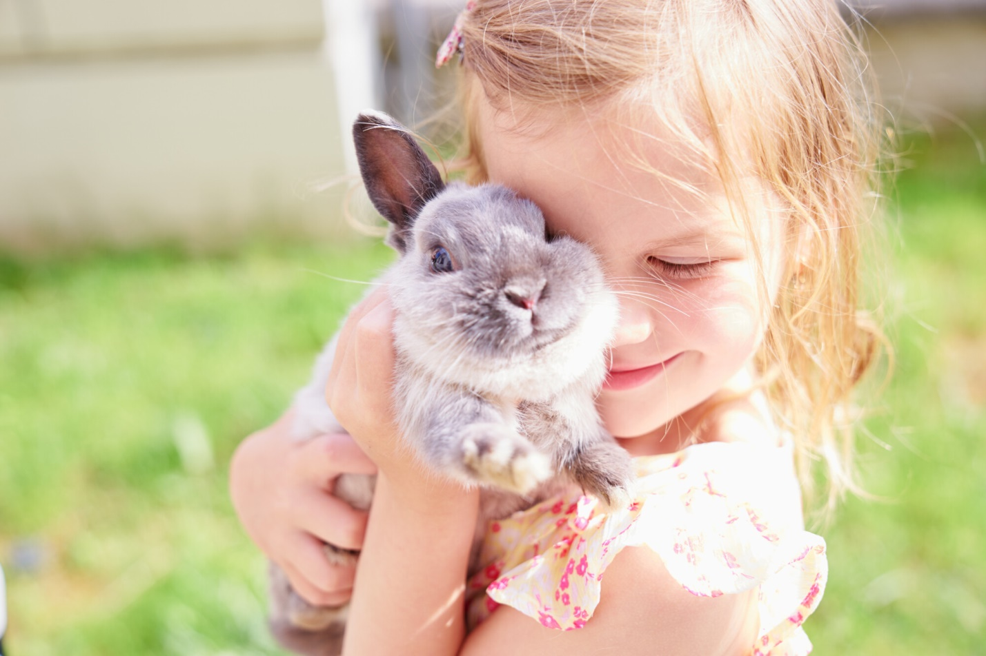 The Different Types of Emotional Support Pets (Besides Dogs!)