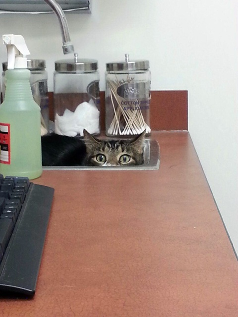 funny-cat-at-the-vet-18