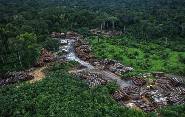 desmatamento-Ibama-Fotos-P-blicas-1200x762-c