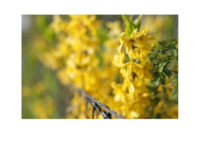 Abril es amarillo_02.jpg
