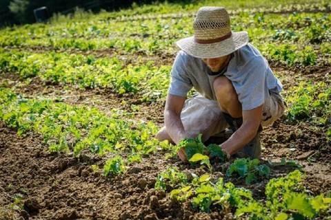Fierucola-Sostieni-l-agricoltura-contadina-toscana-articleimage