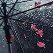 https://i.ibb.co/0YPJWP1/tinypic-umbrella-cool.png