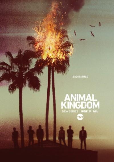 Królestwo zwierząt / Animal Kingdom (2016) Sezon 1 PL.720p.WEB-DL.AC3.2.0.H264-Ralf / Lektor PL