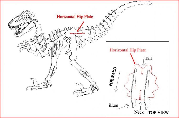 Horizontal Hip Plate 3D DINOSAUR PUZZLE