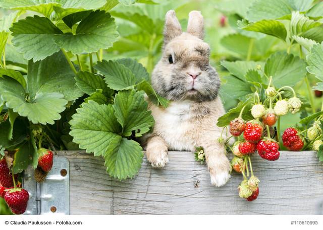 Kaninchen-richtig-fuettern
