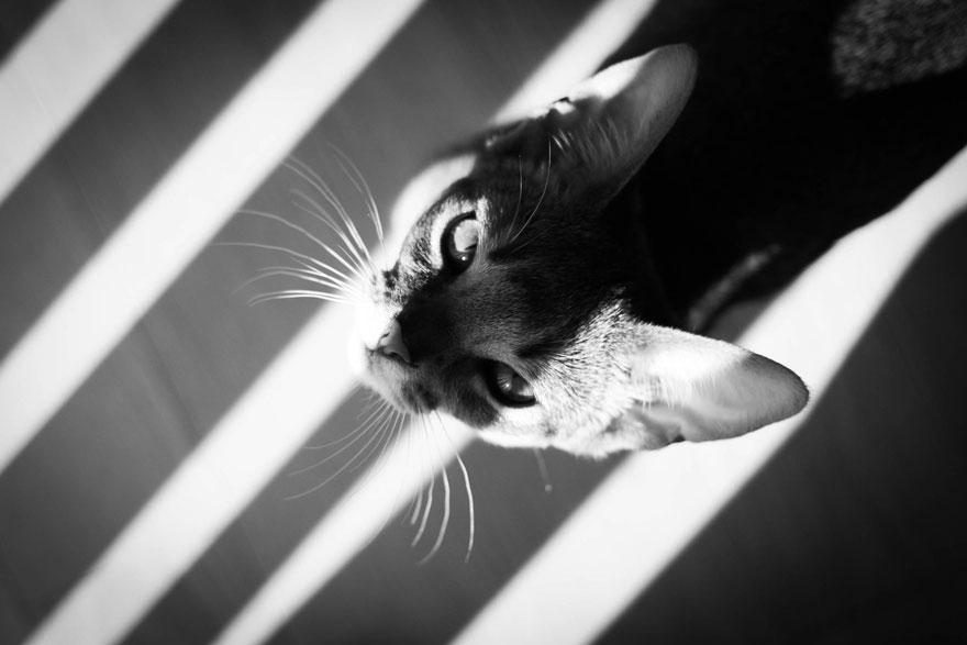 Таинственная кошачья жизнь в чёрно-белых фотографиях-3