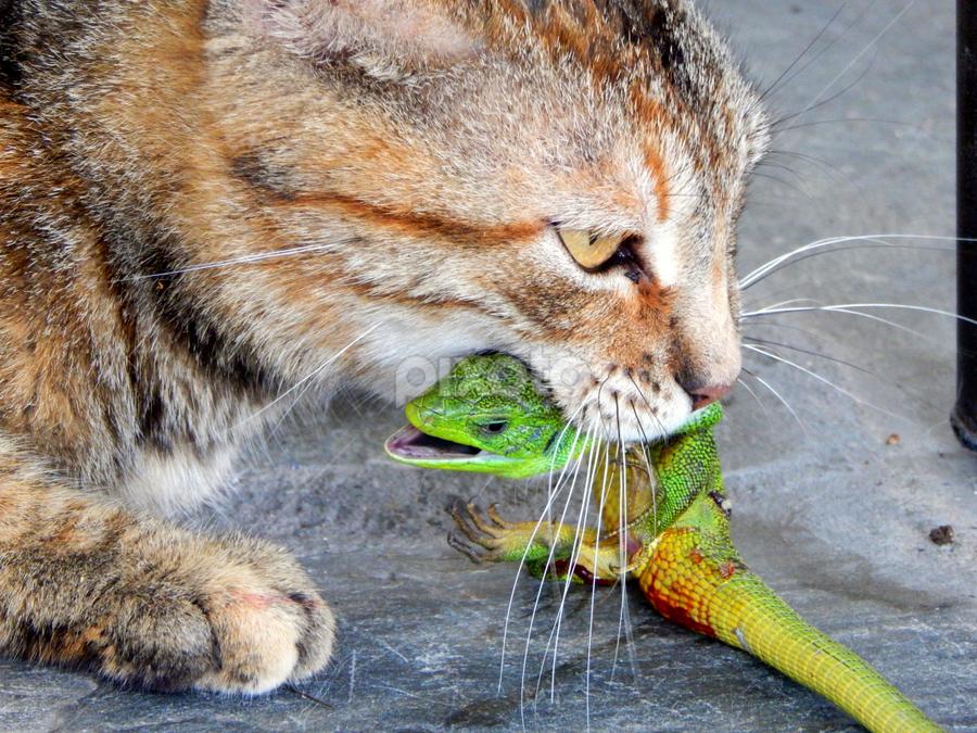 cat-lizard.png
