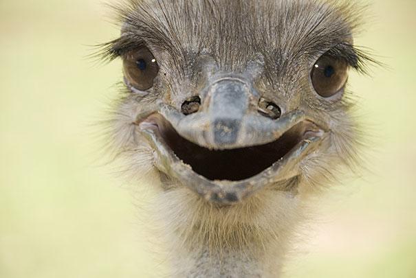 30 фотографий самых счастливых животных на планете-15
