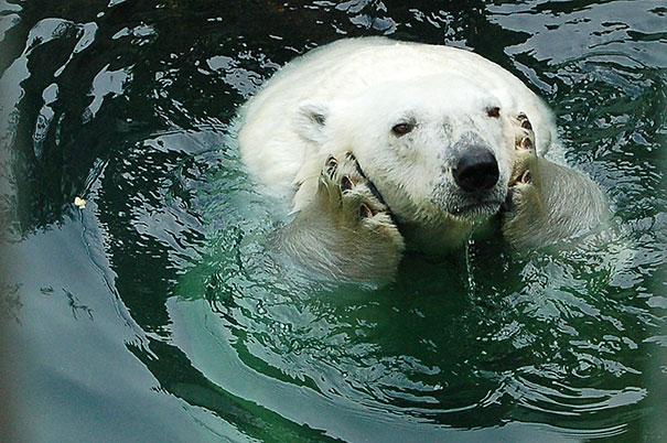 Медведи, такие медведи-11