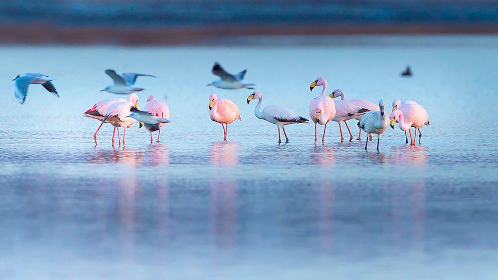 Anunciaron la creación de un nuevo Parque Nacional en Córdoba