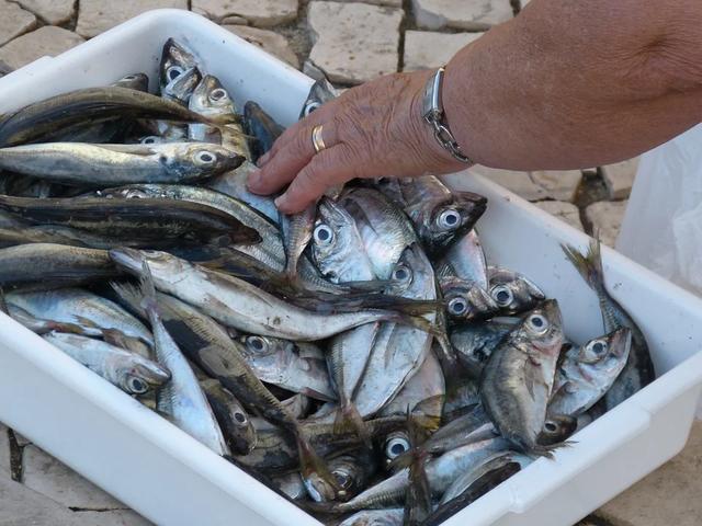 человек трогает рыбу