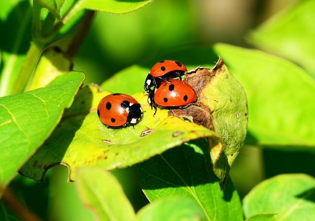 An image of a ladybird.