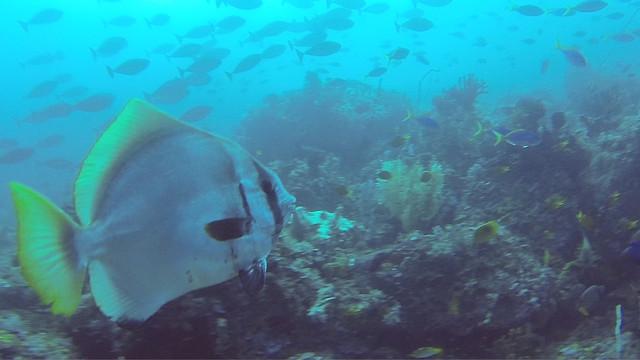 Aquarium-Fish-Bi-G2