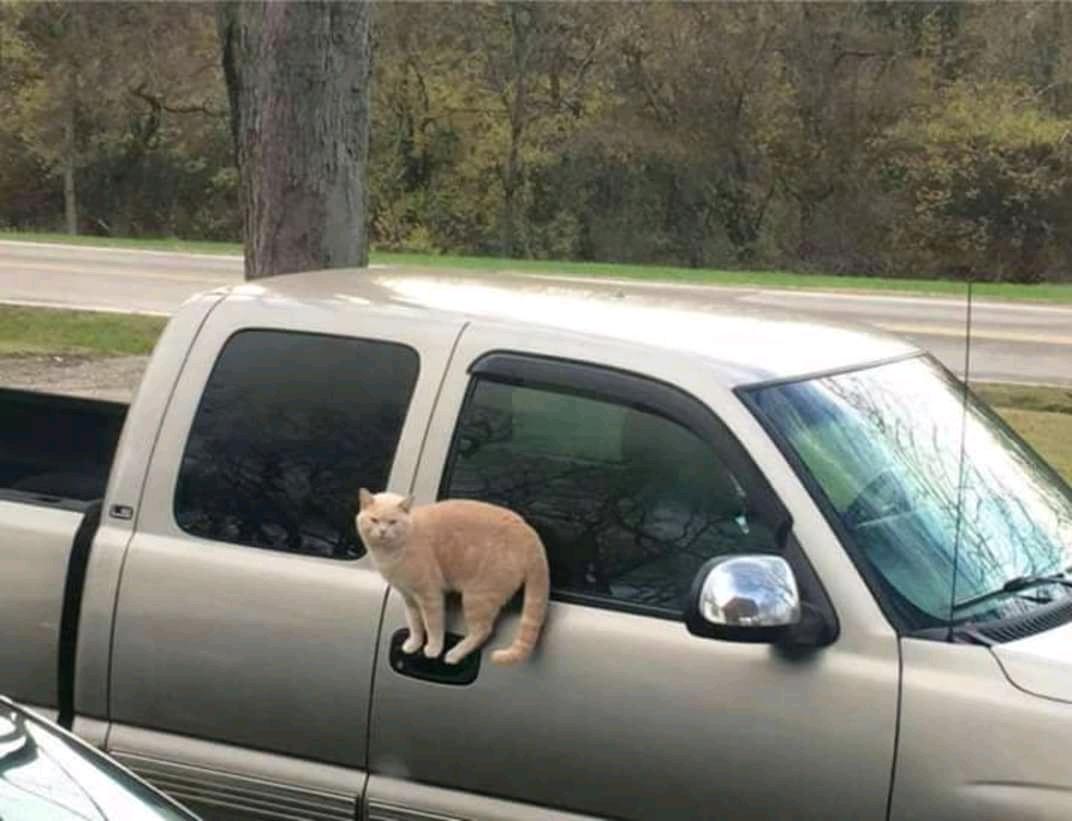 gato-astral, gato-equilibrista