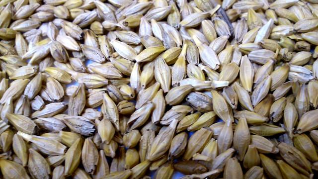 Ячмень - качество плохое, плесень, зерно высохло, употреблять категорически нельзя