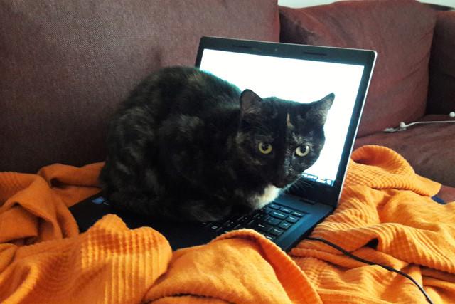 Bast on laptop 2 2