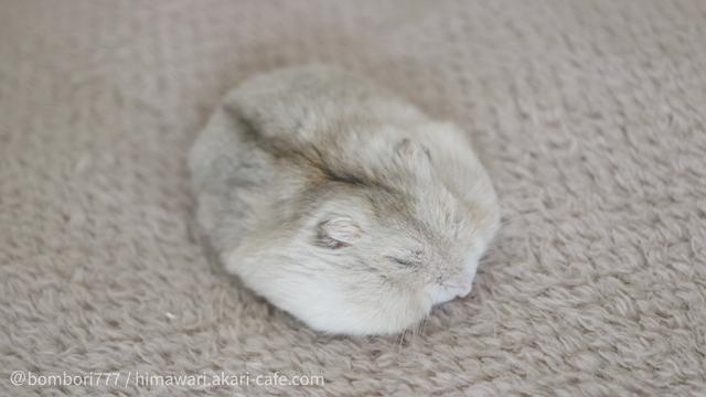 在毯子上睡覺 Image