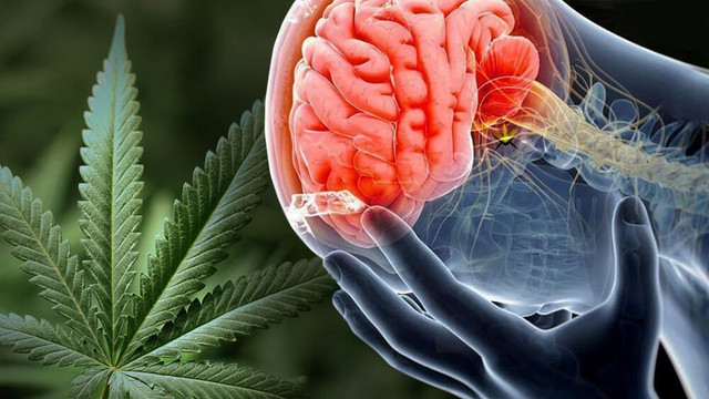 What Is CBD Products for Pain
