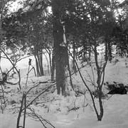 Dyatlov pass 1959 search 34