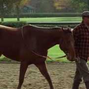 Seabiscuit-2