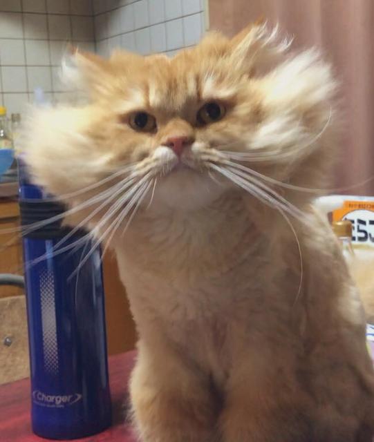 貓貓的新髮型 Image