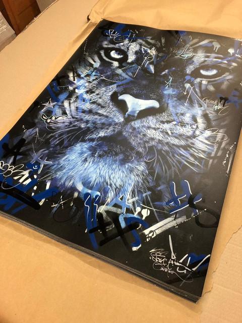 BLUE-TIGER-1