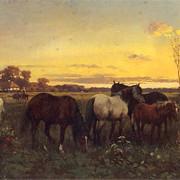 Konie-na-pastwisku