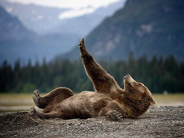 Медведи, такие медведи-9