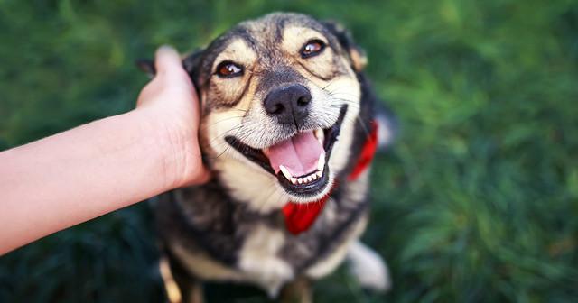 9 Tips Jika Anda Ingin Mengadopsi Anjing