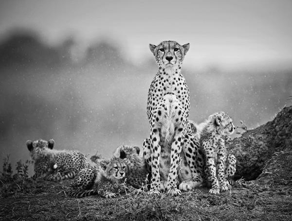 cat family 03