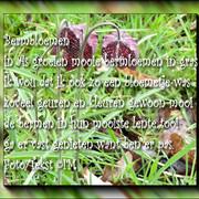 bermbloemen-lente