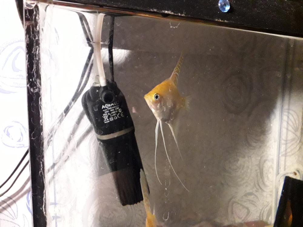 fish-5.png