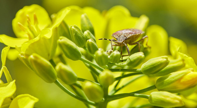 Types of Plant Pests You Need to Know and How to Overcome Them