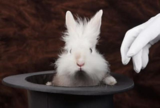 кролик в шляпе фокусника