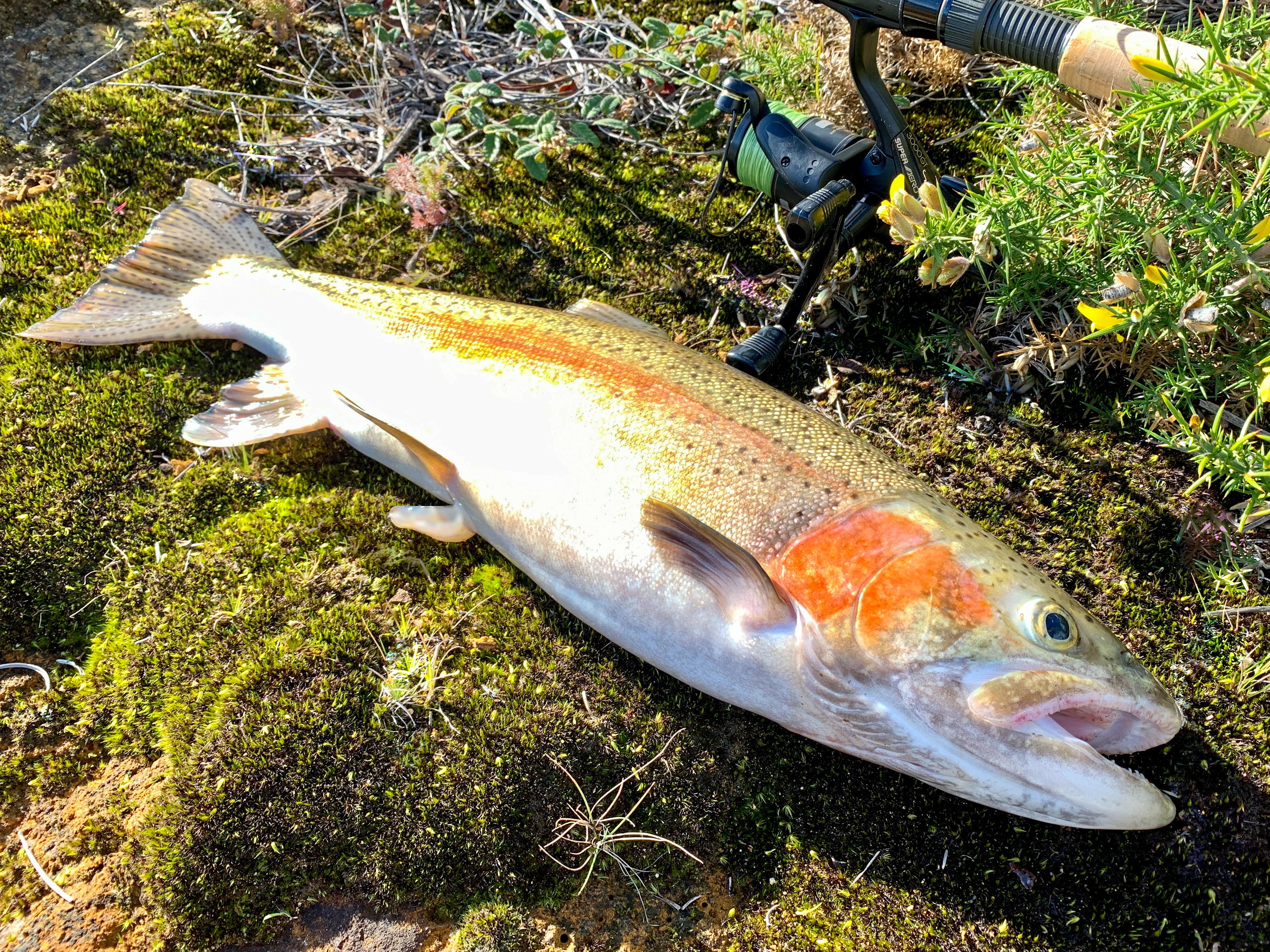 Fishing-Trout2.jpg