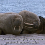 cap-E04-Frozen-Seas-2001-BDRip-AVC-2x-UKR-ENG-sub-2x-UKR-ENG-Hurtom-00-21-58-01