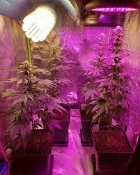 iluminacion lec cultivo interior