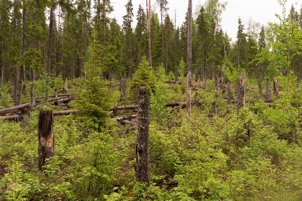 самую большую территорию зоны лесов занимают