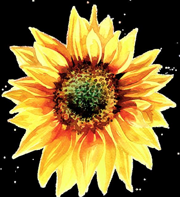 Sunbeam-4.png
