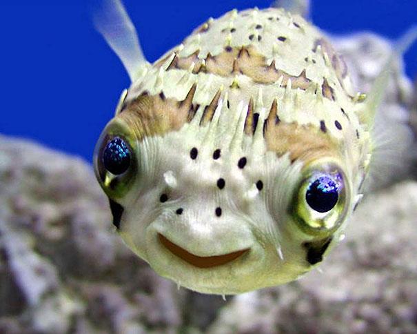 30 фотографий самых счастливых животных на планете-1
