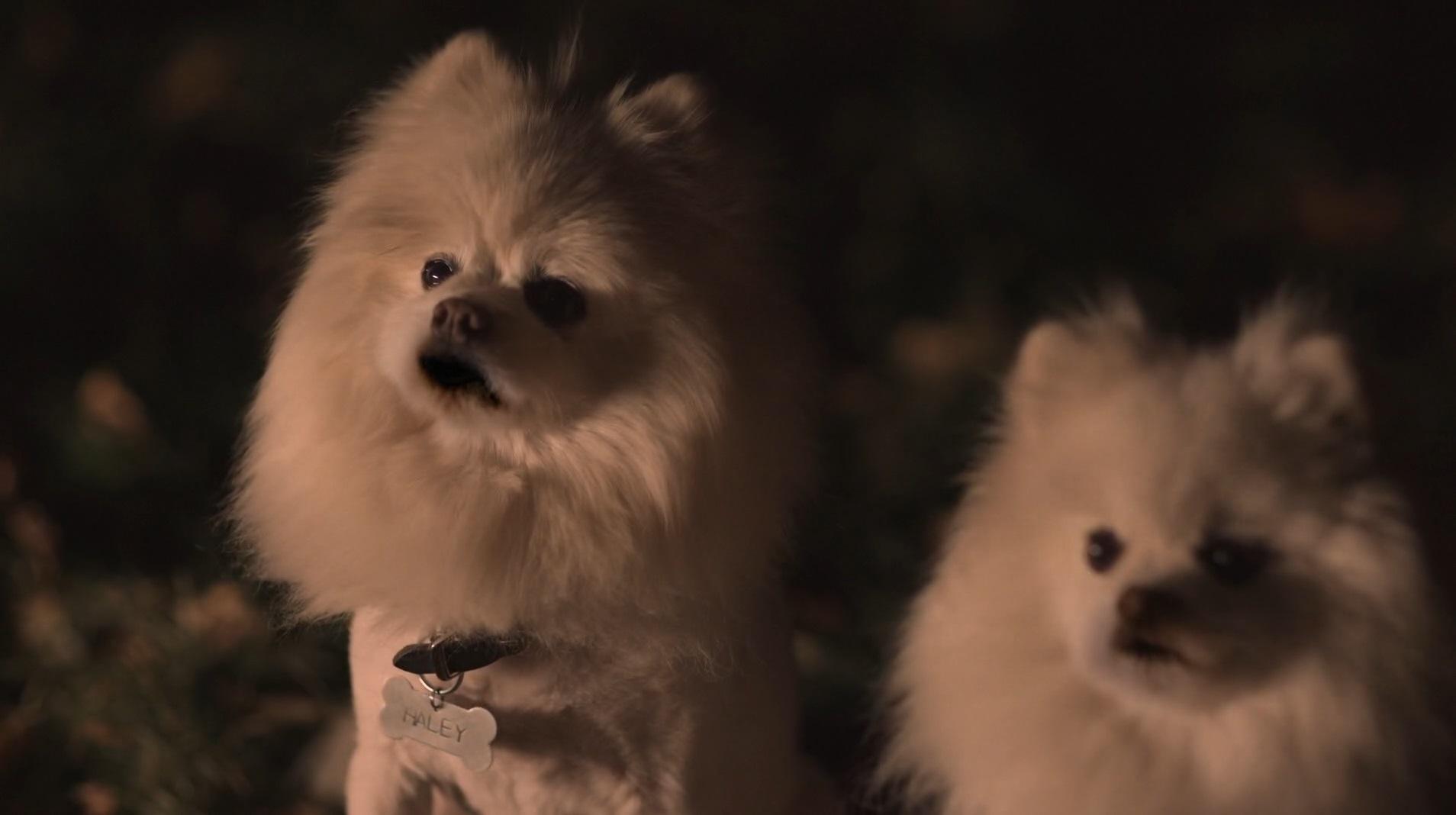 İkiz Patiler   Puppy Swap: Love Unleashed   2019   WEB-DL   XviD   Türkçe Dublaj   m720p - m1080p   WEB-DL   Dual   TR-EN   Tek Link