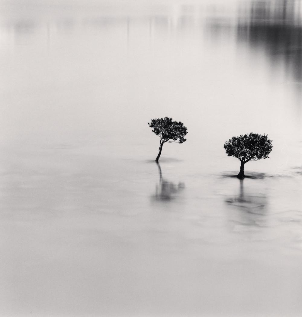 Портреты деревьев Майкла Кенны 26