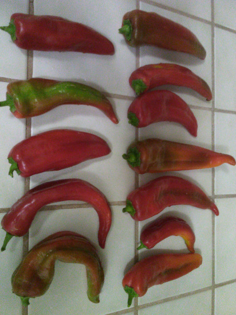 Peppers-On-Display