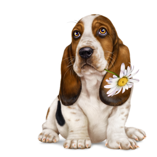 lonely-heart-basset-hound-17.png