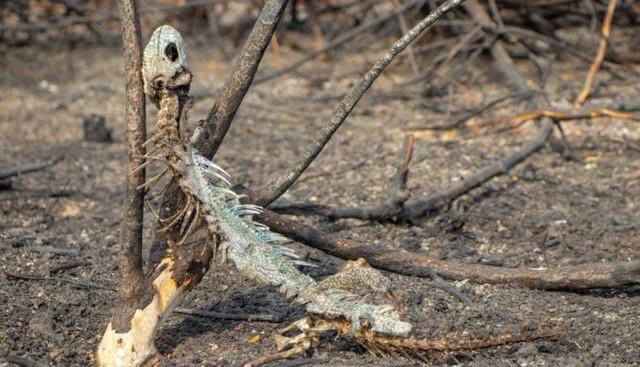 incendio-pantanal-ovurspmta4i13ie396rzr7cm3e6wm8ba9sm98197y0